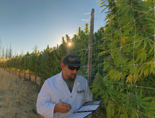 Meet Nat – The Founder of Humboldt Seed Company