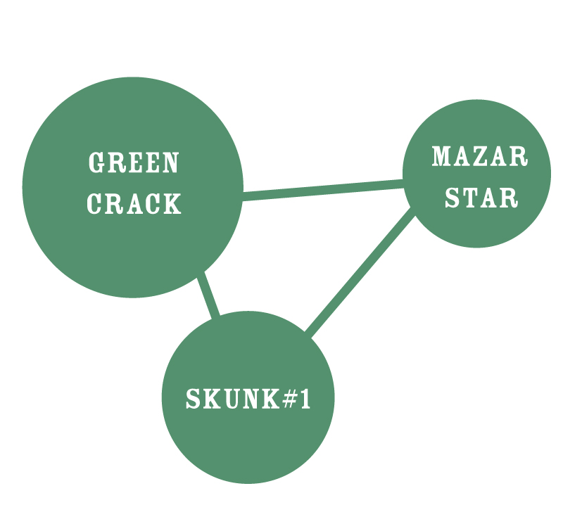 Dream Queen Circle Strain Identifier