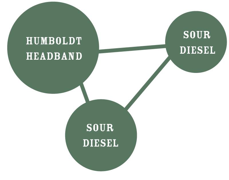 Humboldt Sour Diesel Circle Strain Identifier