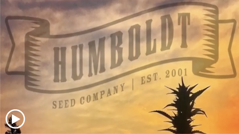 Humboldt Seed Company promo video