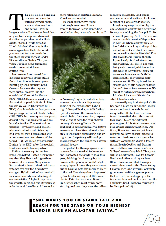 Skunk Magazine