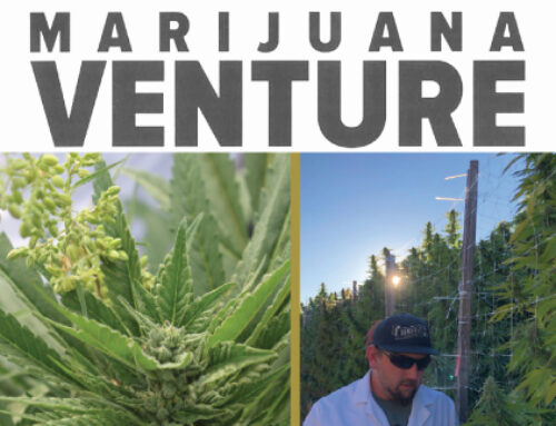 How Autoflowers Are Changing The Industry – Marijuana Venture April 2021