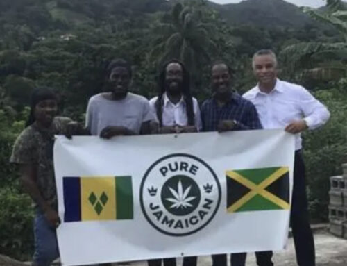 Pure Jamaican, Through Its Gi Life Farm in Jamaica, Announces a Donation of 10,000 Premium Cannabis Seeds to the Country of St. Vincent and the Grenadines to Re-Establish Cannabis Production After Devastating La Soufriere Volcano – Yahoo Finance